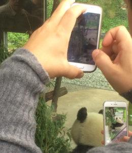 Panda im Berliner Zoo - lagom